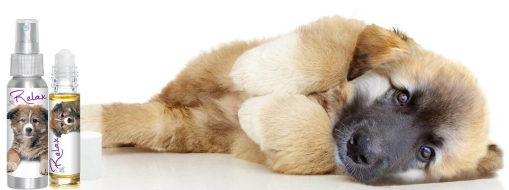are essential oils toxic to dogs