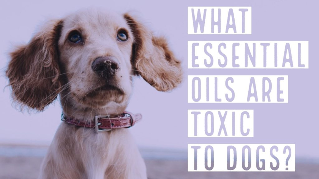 essential oils harmful dogs